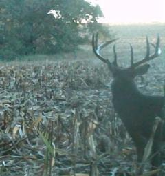 Illinois Hunting